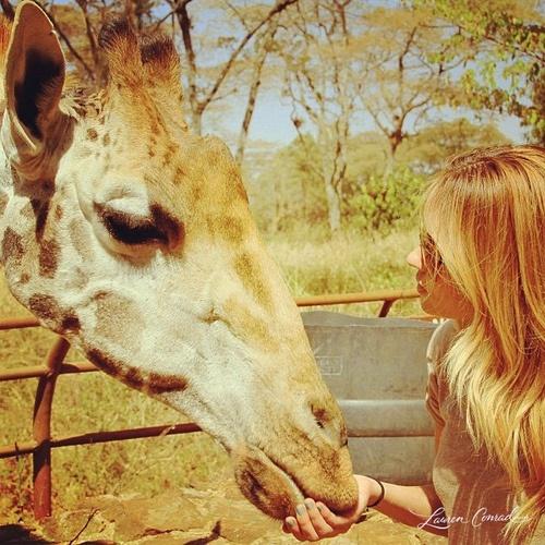 Meet a giraffe