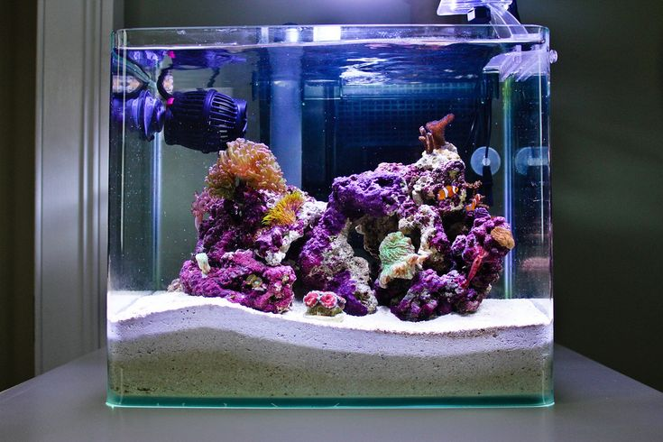 how to build a terrarium in a fish tank