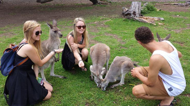 Currumbin wildlife zoo. Gold Coast, Australia