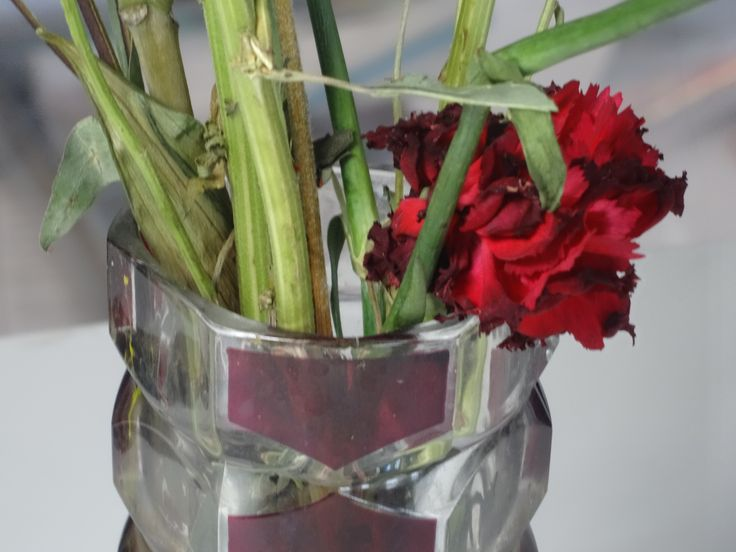 Dead flower // red, vase, close up
