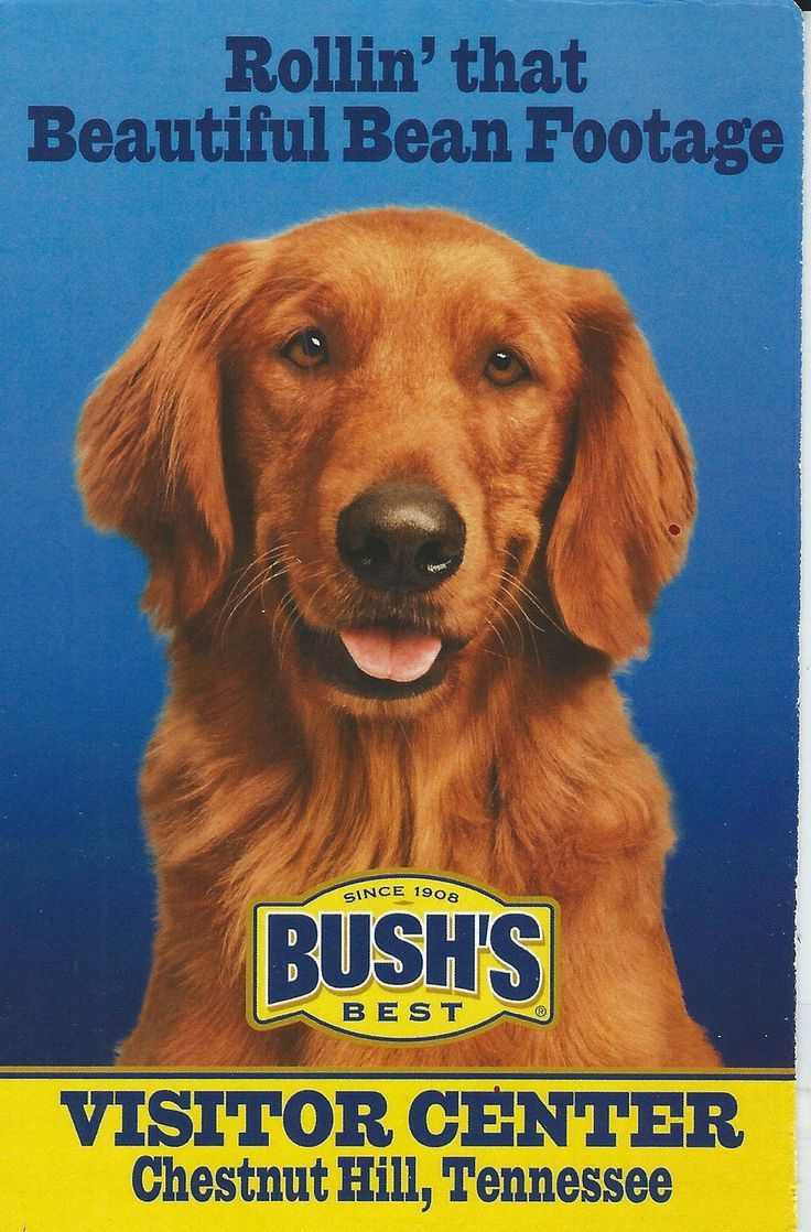 Bushs Big Red Dog Postcard Chestnut Hill TN Red dog