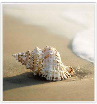 The beach life = the sweet life.