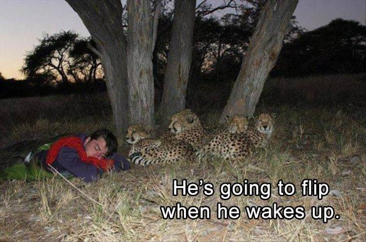 62 Hilarious Funny Pictures That Will Make You Smile