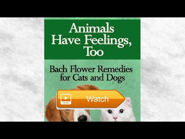 animals have feelings too book