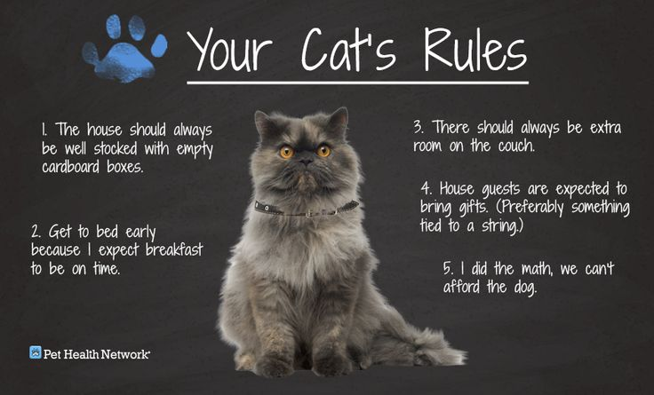 Your Cat S Rules Cats Rules Cute Funny Cat Behavior