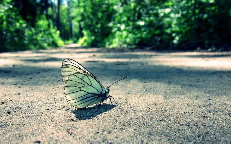 Portadas de Mariposas para Facebook - Portadas para facebook