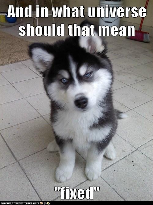 Skeptical Newborn Puppy: Sounds More Like You're Breaking Something  #pet #dog #husky