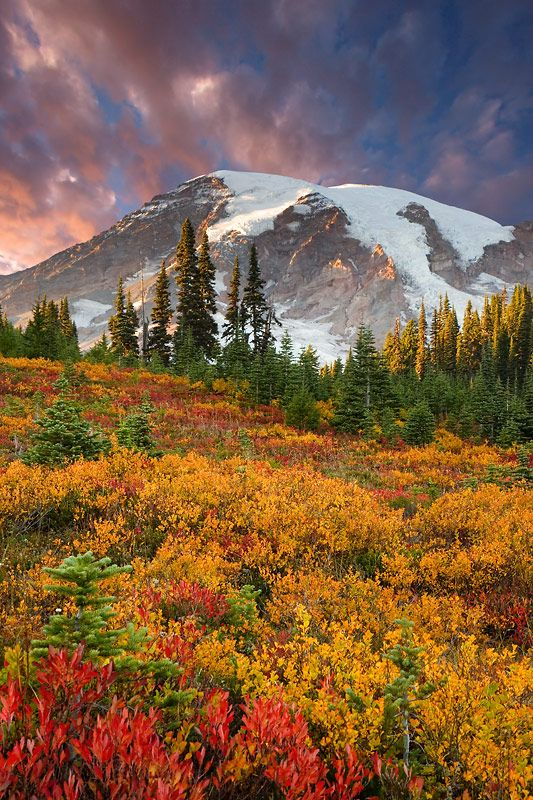 Mount Rainier - A Colorful Paradise - by Don Paulson (Just gorgeous with the fall colors!)