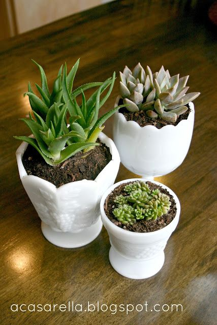 Container Garden:  Elena of 'A Cassarella, who's admittedly obsessed with milk glass, used three larger vessels to plant a mini garden of succulents.