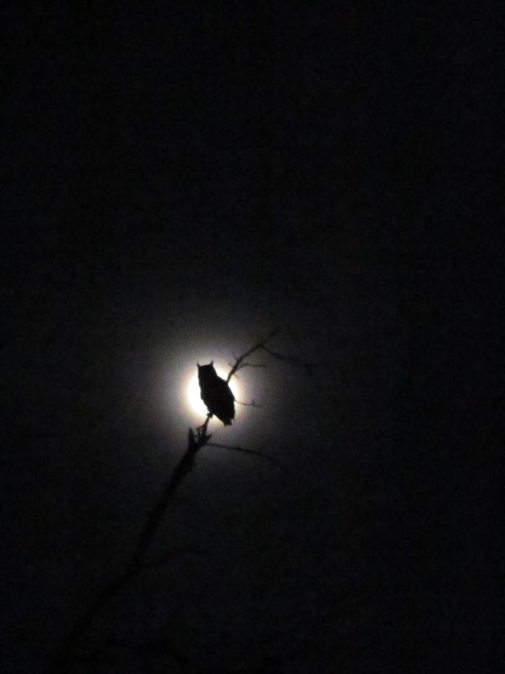 The only time that I fear the darkness is when the owl calls my name under the full moon light....
