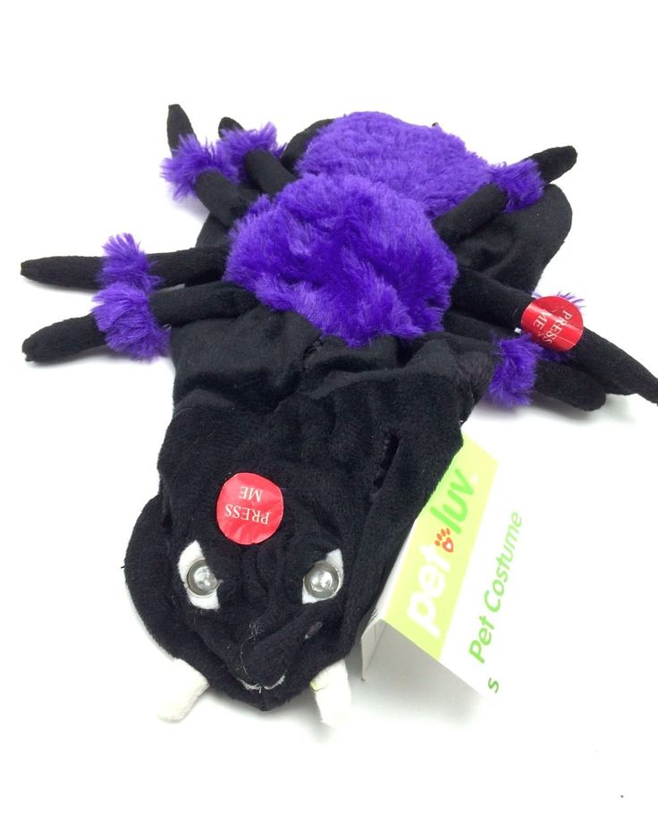 Check it out Dog Spider Costum... found at  http://keywebco.myshopify.com/products/dog-spider-costume-outfit-inflates-lights-small-10-13-inch-cute-halloween-new