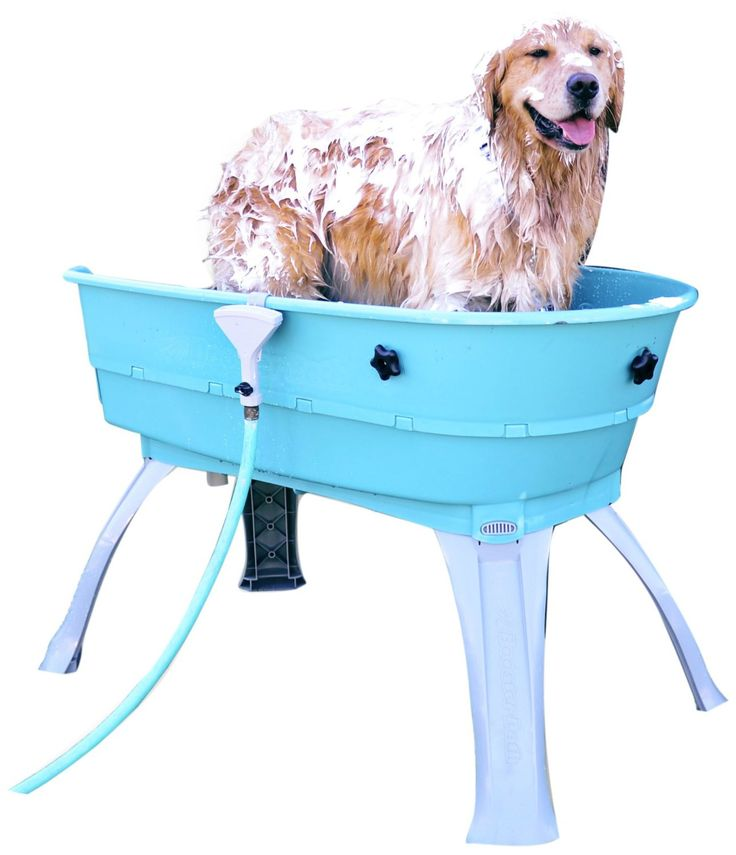 Best 25 Goldendoodle Grooming Ideas On Pinterest Puppy
