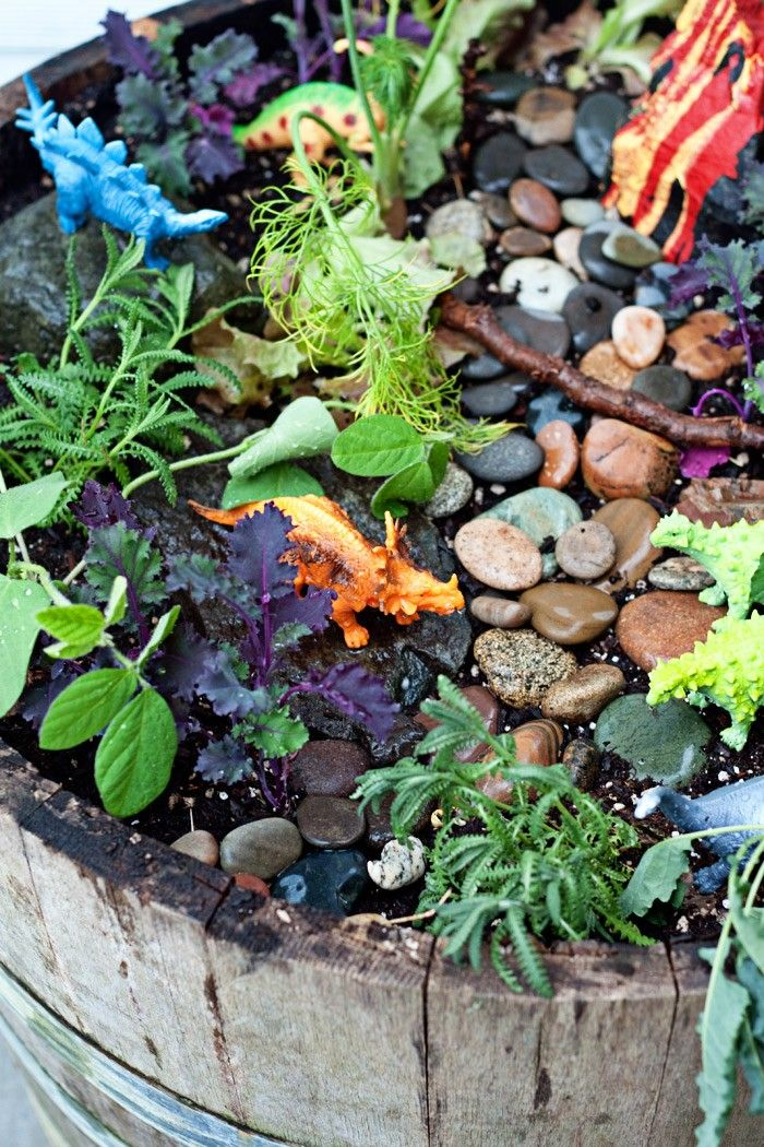 25 Unique Fairy Garden Plants Ideas On Pinterest Mini