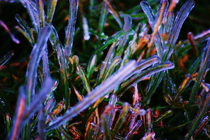 ice coated grass following an ice storm in Shenandoah, Virginia, USA  see more in Flora and Funghi | LESS BLATHER, MORE BITE