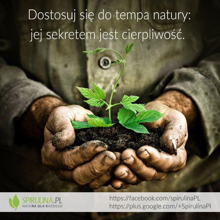 Sekretem natury jest cierpliwość... http://www.spirulina.pl/ #zdrowie #natura #cytaty #motywacja