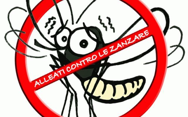 Combattere le zanzare con gli olii e Quando si hanno bambini piccoli in casa o persone sensibili,utilizzare dei prodotti chimici per allontanare le zanzare potrebbe non essere l'alternativa migliore. Per fortuna per allontanare questi f #zanzare #rimedi #naturali #oliiessenziali