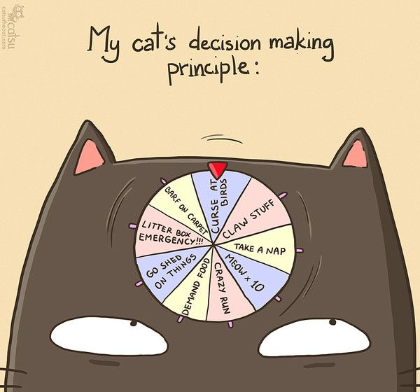 The one about decisions | Catsu The Cat