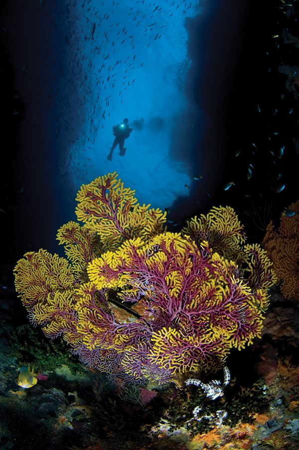 Wild Dives in the Coral Triangle | I love Nature! | Diving ...