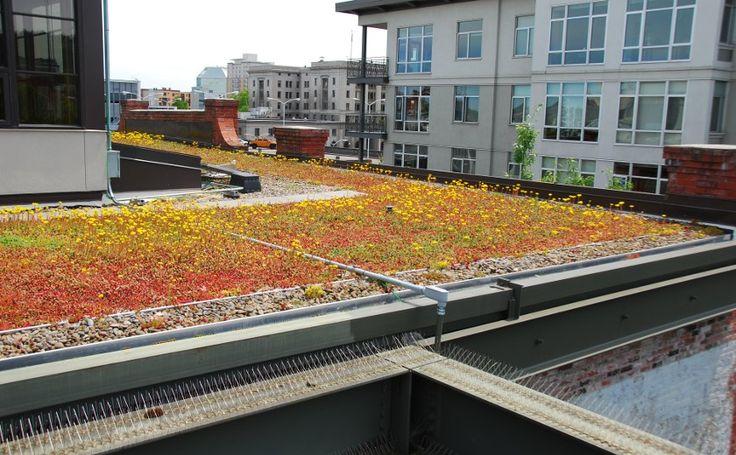 23 best rooftooooop images on pinterest green roofs. Black Bedroom Furniture Sets. Home Design Ideas