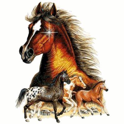 Imagem com belos cavalos malhados