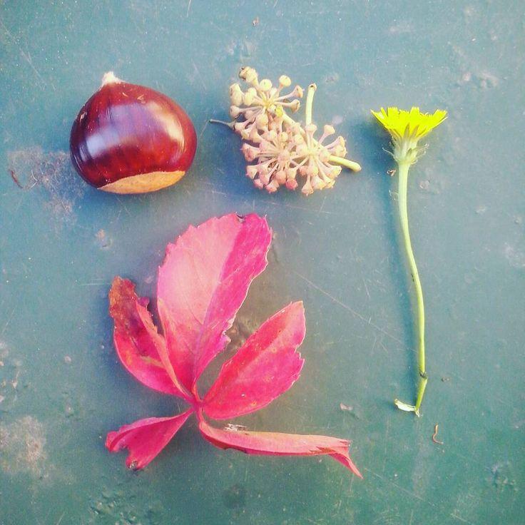 Beloved autunno #autunno #autumn