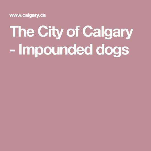 The City of Calgary -  Impounded dogs