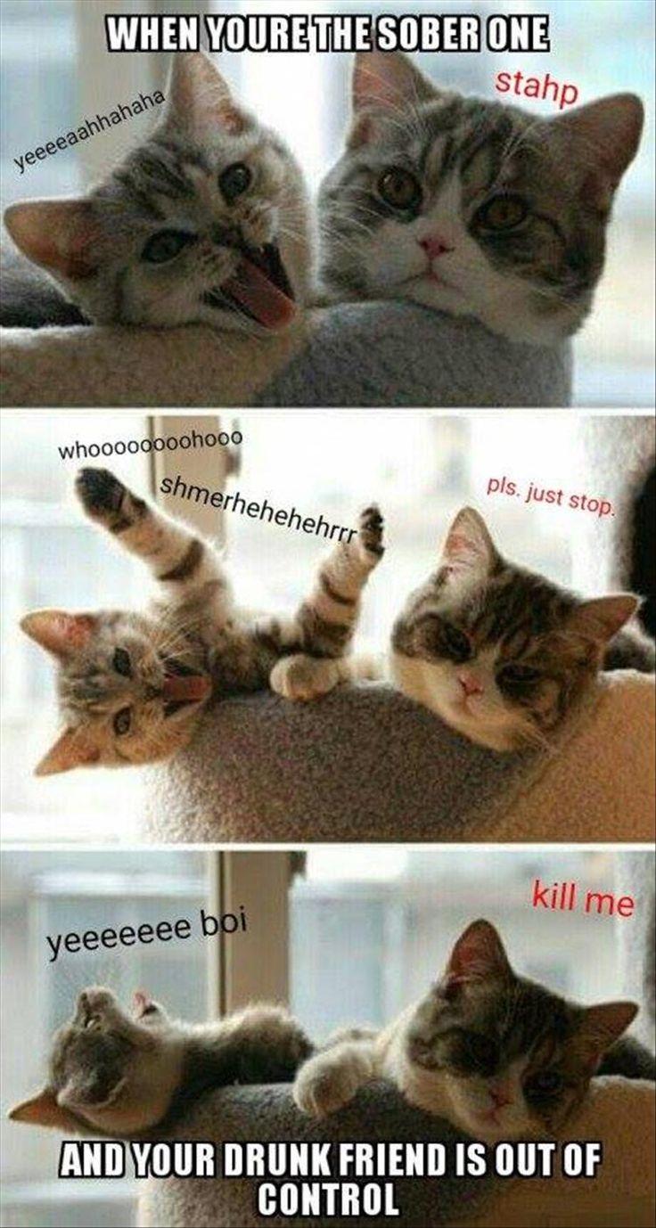562 best cat shtuff images on Pinterest