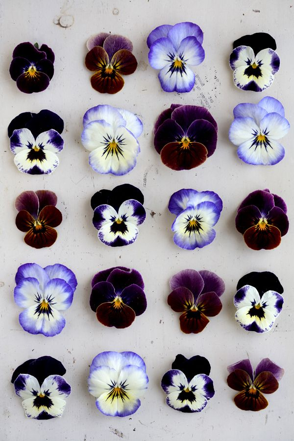 violets..: Pistachios Cakes, Shades Of Purple, Color, Alice In Wonderland, Purple Flowers, Flowers Power, Violets, Pansies, Edible Flowers