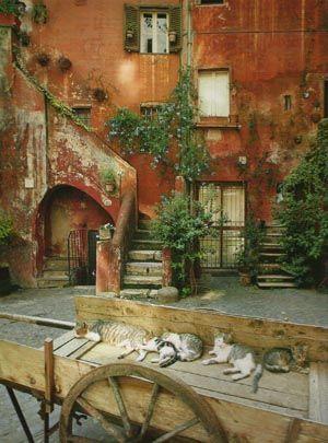 Cat nap(s) in Rome, Italy