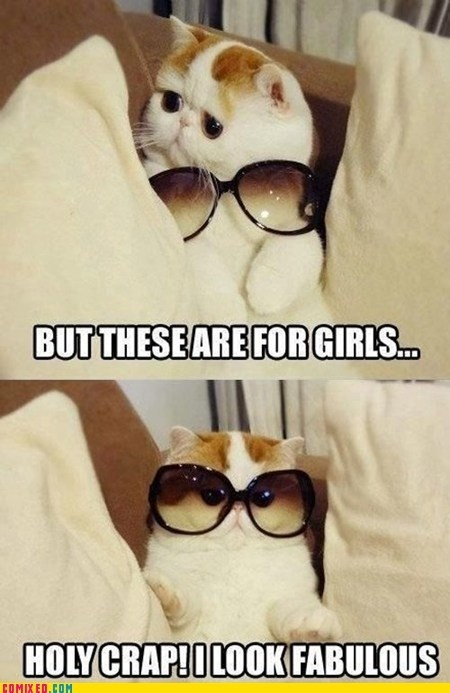 If only all cats were awesome