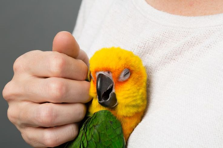 Can You Train Your Bird to Like Being Pet?