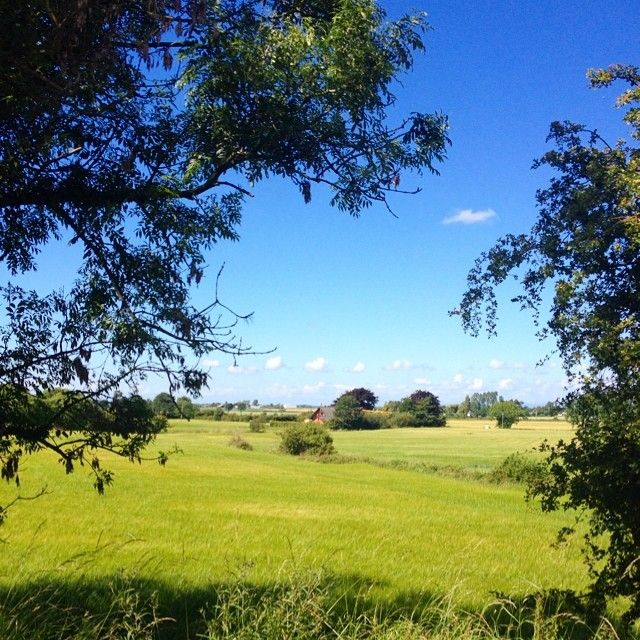 Burscough walks. #sunny #burscough #country #summer #countrywalks #bluesky #lovemeafield