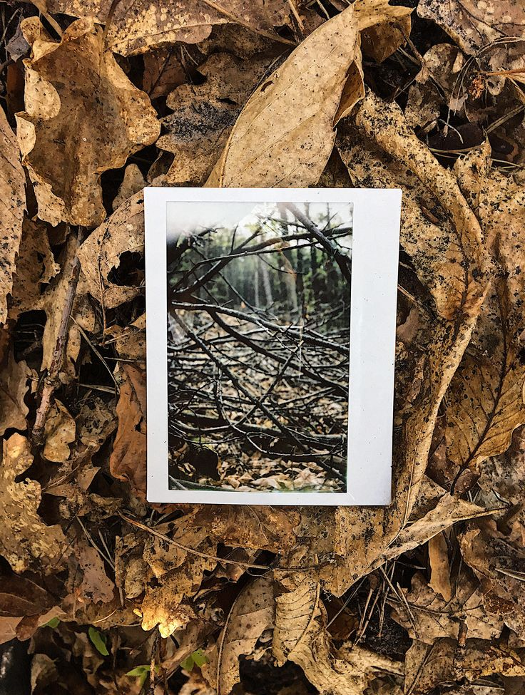 https://flic.kr/p/V2V6yk | that1with the sun shining through the spiderweb of branches. | #fujiFilm #instax #instantPhotography #polaroid #polaroidWeek #roidWeek #spring #autumn #fall #leaves #forest #trees #wood #landscape #nature