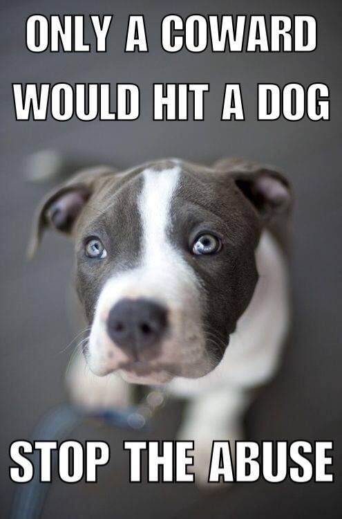 Only A Coward would Hit a Dog  Stop The Abuse