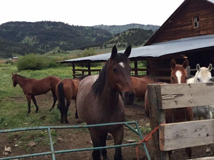 G Bar M Ranch (Clyde Park, MT) - omdömen - TripAdvisor