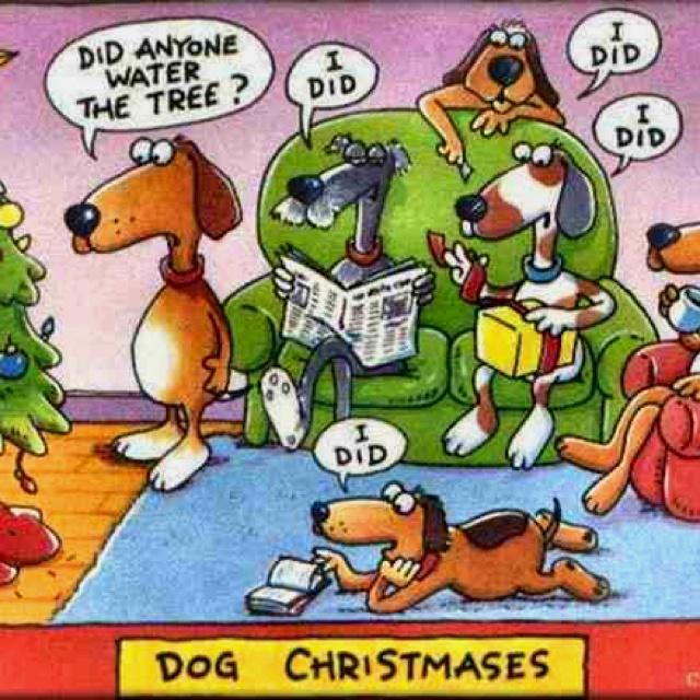 My dog is PEEING on the Christmas tree! Funny christmas