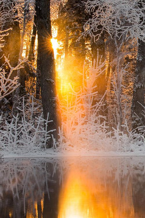 Frosty forest in late afternoon ~ Estonia