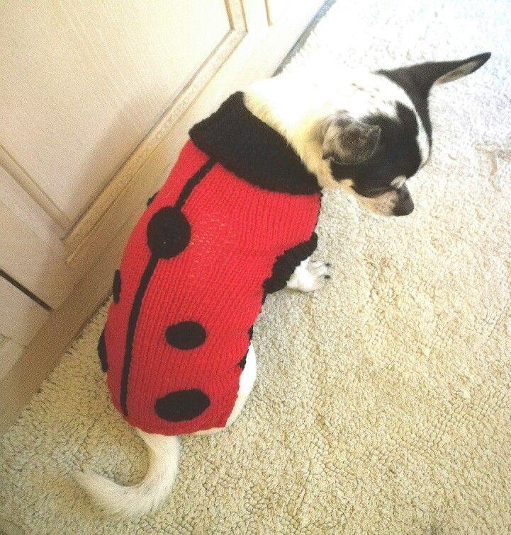 Ciao sono Mary...e oggi mi sono vestita da coccinella!
