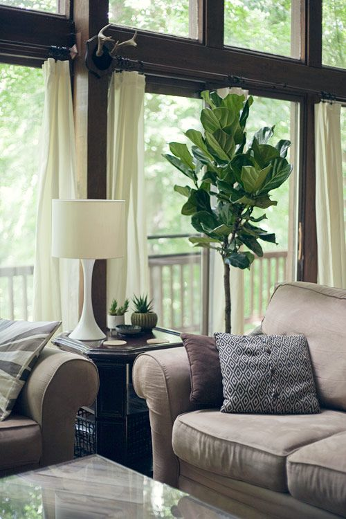 17 Best Images About Plantas On Pinterest Planters Snakes And Plants
