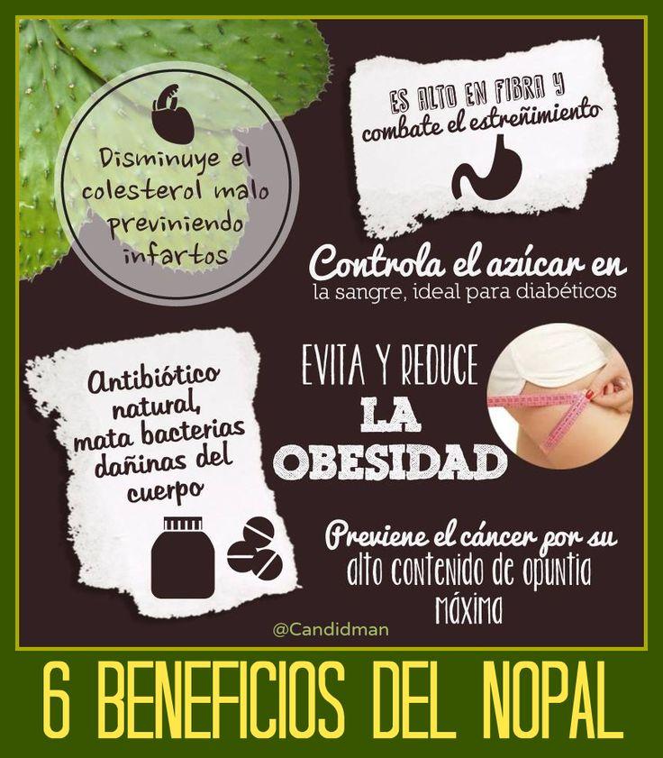 Beneficios y propiedades del Nopal