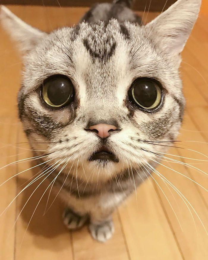 Le tenere foto della gatta pi triste del mondo for Immagini della dispensa del maggiordomo