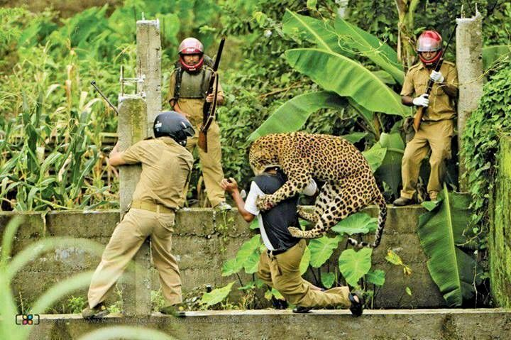 Jaguar attack india welcome to the jungle pinterest