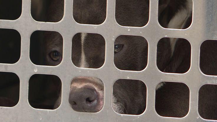 Dead dogs found in empty Catawba County building, police say https://cstu.io/b5776b #CutePuppies #CutePuppy #Puppy #CuteDogs #Dogs