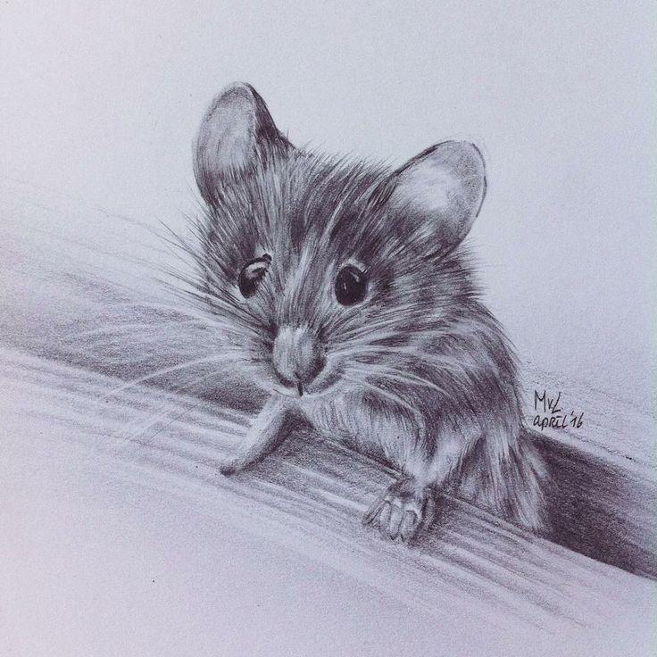 Pencil drawing mouse   • mariellevanleeuwen@live.nl • AR•T•INT • www.facebook.com/artintx • instagram @artint