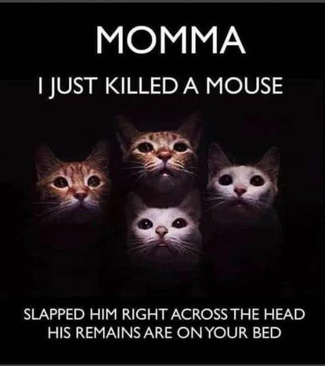 44 Humorous Memes For Weary Brains In 2021 Funny Cat Memes Funny Animal Memes Funny Animal Pictures