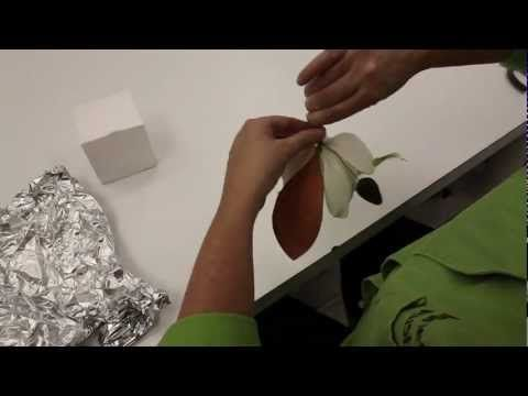 Making a Southern Magnolia Leaf and Bud out of Gumpaste - YouTube