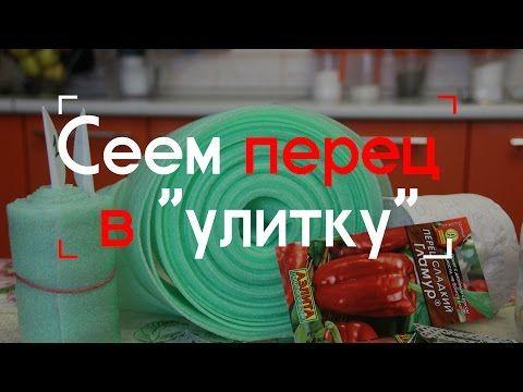 "Сеем томаты в ""улитку"" (22.02.2016). - YouTube"