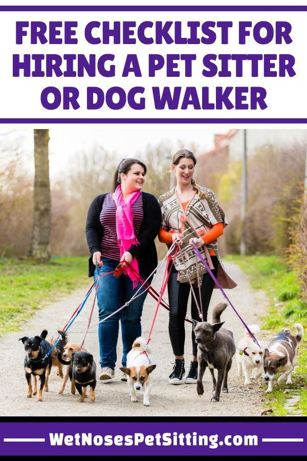 Checklist For Hiring A Pet Sitter Or Dog Walker Pet Sitters Dog