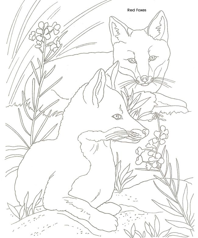 find this pin and more on coloring pages for adults - Animal Pictures To Colour In