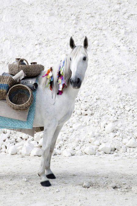 White Traveling Horse
